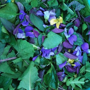 Violet salad from an urban forage